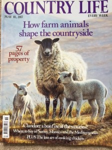 Country Life 1